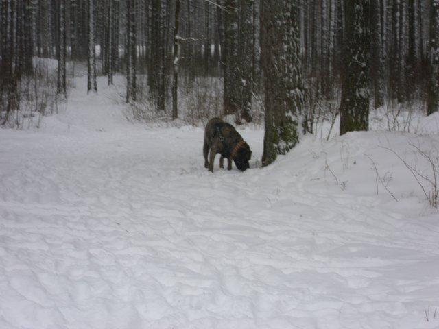 Собаки Татьяны Моисеенковой, кот Мензурка - Страница 3 9babb5a77e9b