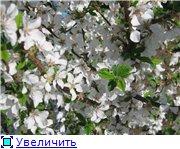 Сад моей Свекрови 1cb879fbf3aet