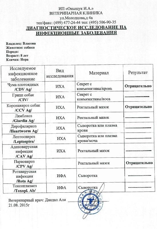 Москва, Нора, сука 22.08.2007 из Солнцево 738546711c83