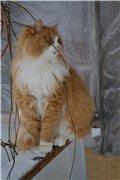А у меня живет кошка... - Страница 6 F2762322827ft