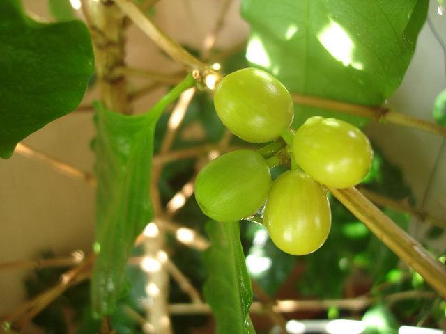 Кофейное дерево - Страница 5 001471ee5aeb