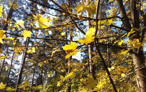 Осень, осень ... как ты хороша...( наше фотонастроение) - Страница 8 D0c74d7a2105