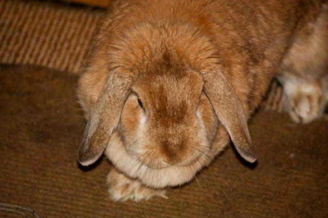 Кролики, декоративные и не очень) - Страница 2 461c4d9305c4