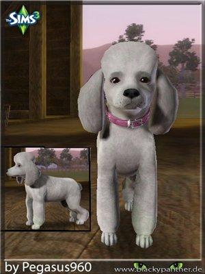 Собаки - Страница 3 1a36c34ecc1a