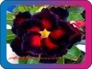 продам семена экзотических растений - Страница 3 70cdeeb972c9