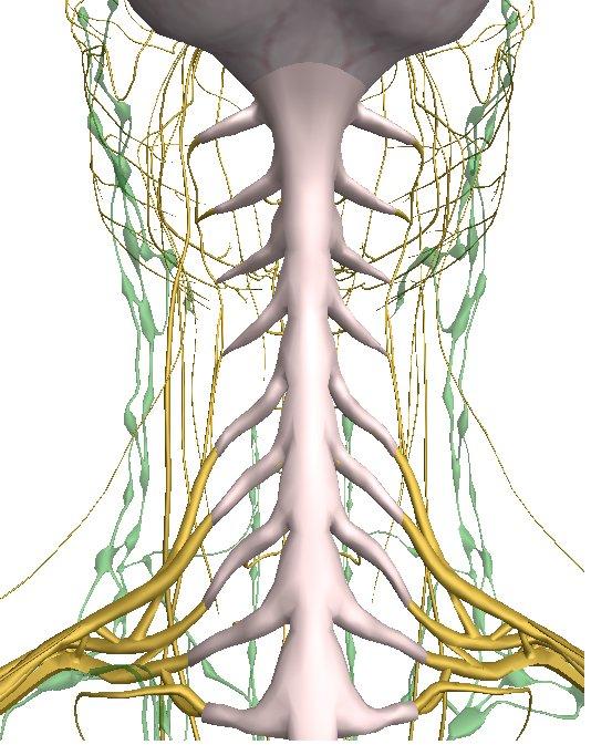 Обсуждение рун отдела шейных позвонков - Страница 5 A11c5f6889f1