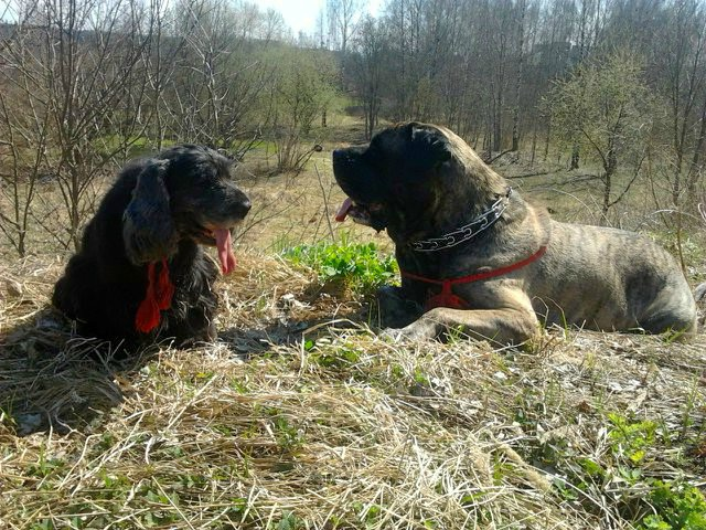 Наши собаки, друзья и гости, кот Мензурка - Страница 32 05f1d3e3a56b