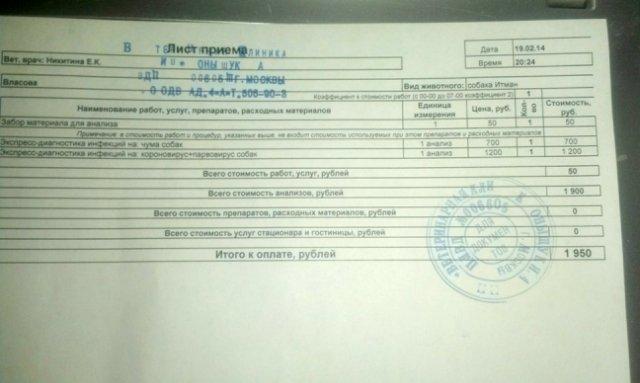 Москва, Итман, кобель 6 лет C0c2ec4b7124