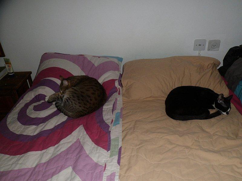 Коты, кошки, котята и все что с ними связано - Страница 64 11cd09d3351a