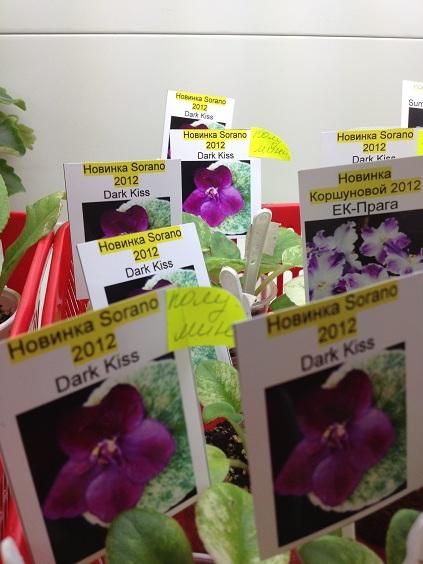 Выставка цветов - Страница 2 6172aa531b4c