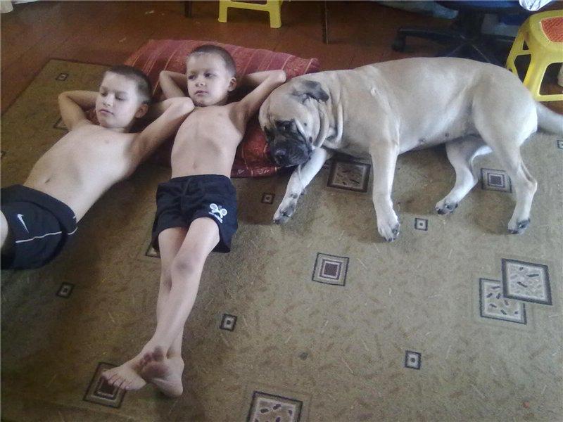 """Фотографии """"Бульмастиф и дети"""" - Страница 3 7561b7851559"""
