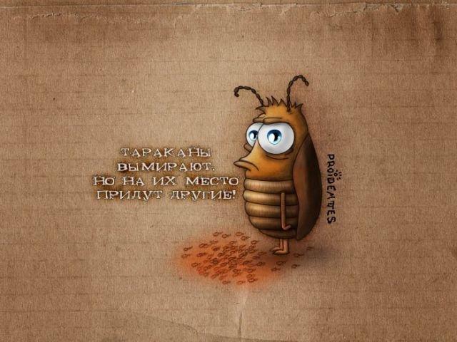 Гадание на таракане. E482b4a35c4b