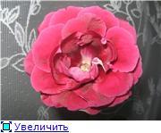 Семена глоксиний и стрептокарпусов почтой - Страница 7 6629ea529357t