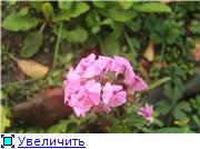 Cад Людмилы Ивановой из черкасс 0658a843affft