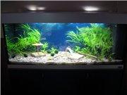 Мои последние аквариумы - Страница 2 0b04e5dcd7a4t