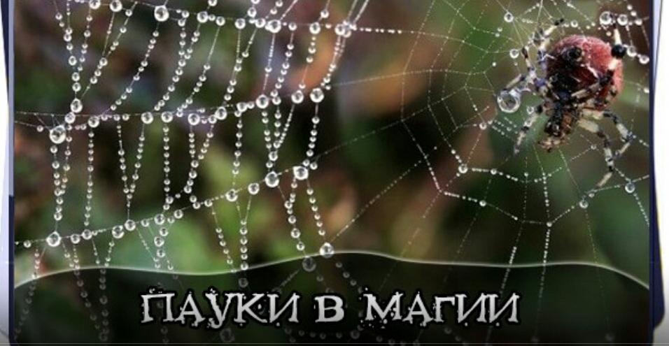 пауки в магии 5eb1d21298b6