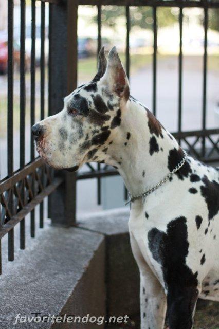 Лучшей собакой года среди собак всех пород в Германии.... 64267456096f