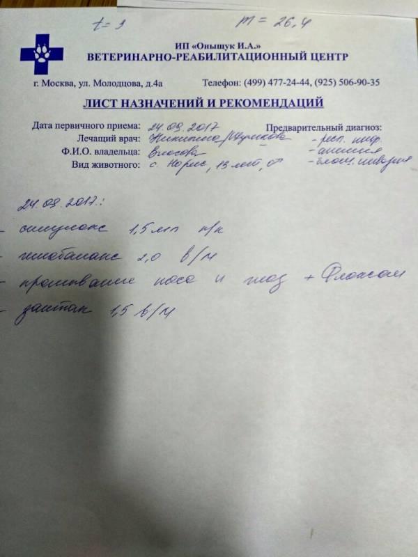 Москва, Норис, кобель 23.09.2004 1054fb0f4b72