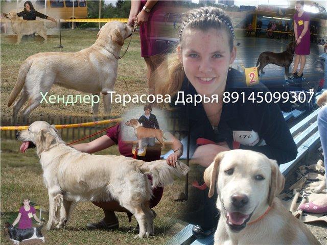 Хендлер Тарасова Дарья - Страница 2 B27c41e6a8d0