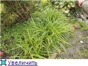 Cад Людмилы Ивановой из черкасс 8a66a2d33be2t