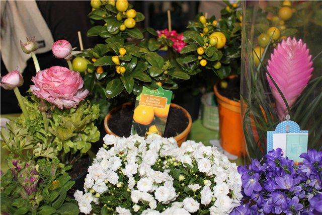 Выставка: Ландшафт и приусадебное хозяйство 2013, Алматы. 79158042a01c