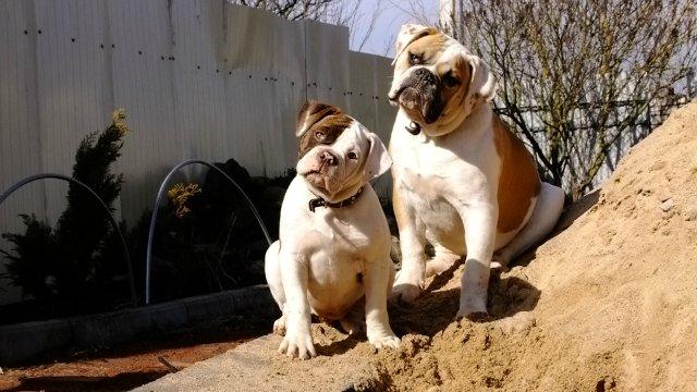 Собаки питомника Carpen Diaz - Страница 2 F1306c25a049