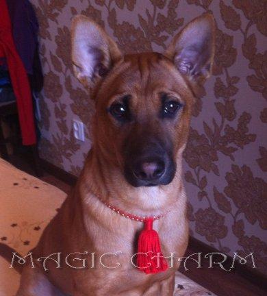 MAGIC CHARM - обереги, ошейники, украшения, ринговки и другие аксессуары для  собак и кошек. Bcab4b10ef4b