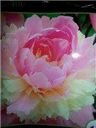 Садовые многолетние цветы - давайте меняться - Страница 3 5e9c31bde494t