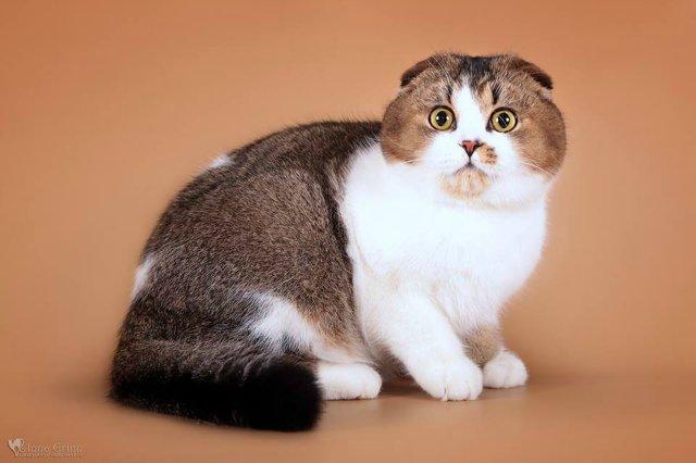 Кошки-Коты-Котята 76d42278f37c