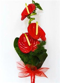 Букеты цветов - поздравления с Днем рождения. - Страница 23 Afeacd9d79f2t