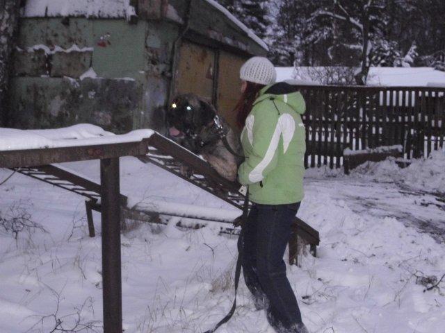 Собаки Татьяны Моисеенковой, кот Мензурка - Страница 3 06e8b5d75286