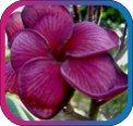 продам семена экзотических растений - Страница 3 5042cc2da7c4