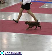 """""""ЕВРАЗИЯ-2012"""" B651978bc7bct"""