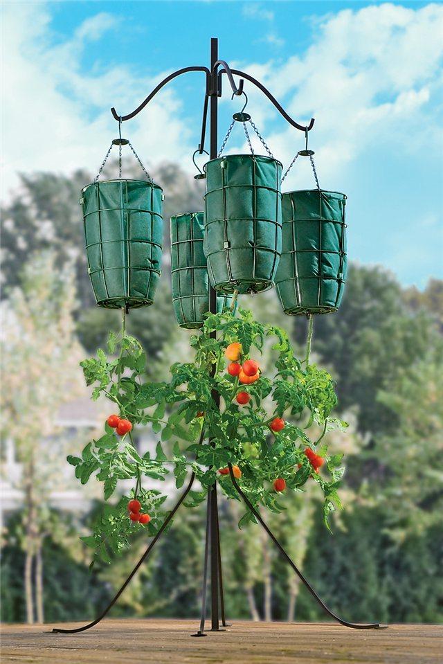 Технология выращивания помидоров (томатов) вниз головой 4a2fc8e1c69d