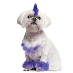 Интернет-зоомагазин Pet Gear - Страница 3 599493a065df