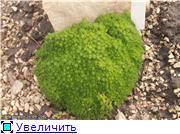 Cад Людмилы Ивановой из черкасс 411054fdfb64t
