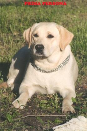 """Питомник """"Прима Персона"""". Мои собаки-моя жизнь! 22122836928d"""