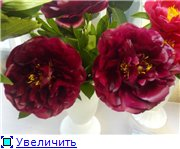 Выставки 3c3b64845718t