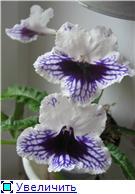 Семена глоксиний и стрептокарпусов почтой - Страница 2 Ea0283a760d3t