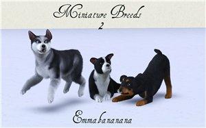 Собаки - Страница 3 67469be55aaf