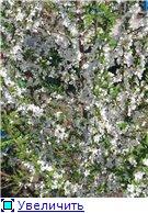 Сад моей Свекрови 1d37ac9a3249t