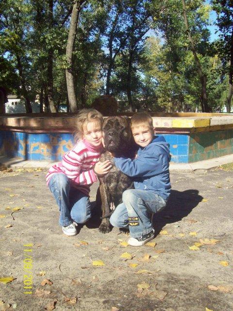 "Фотографии ""Бульмастиф и дети"" - Страница 6 A31f238004fe"