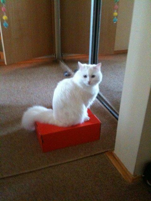 Коты, кошки, котята и все что с ними связано 61a6ebaaa291