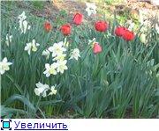 Сад моей Свекрови 3dac154764a1t