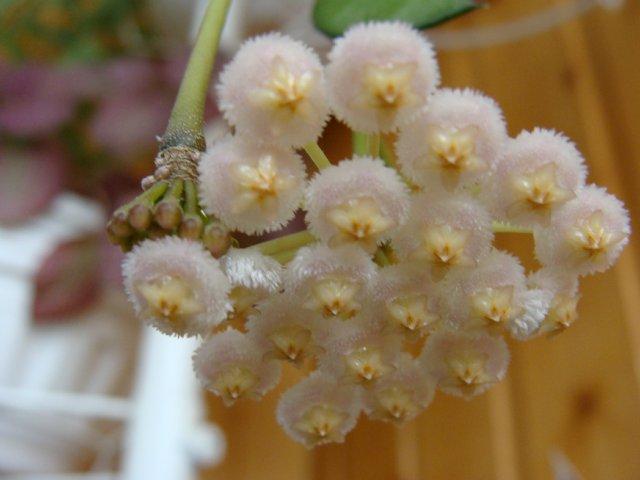Мои цветочки - Страница 40 E0080589e02b