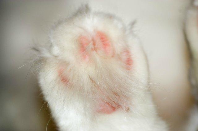 Коты, кошки, котята и все что с ними связано - Страница 4 A9b0ad6762ee