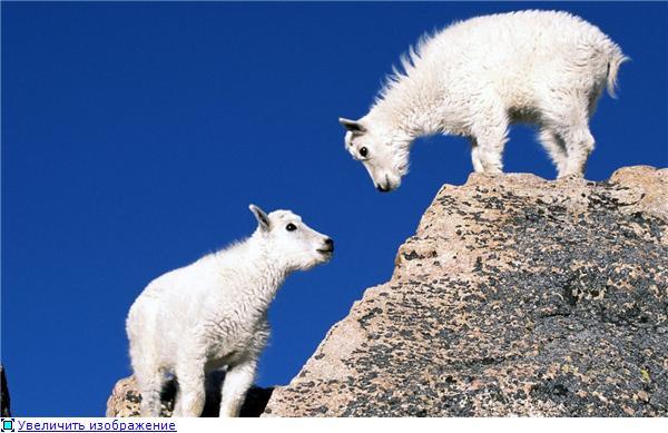 Фотографии разных животных 6d97b1301aa1t