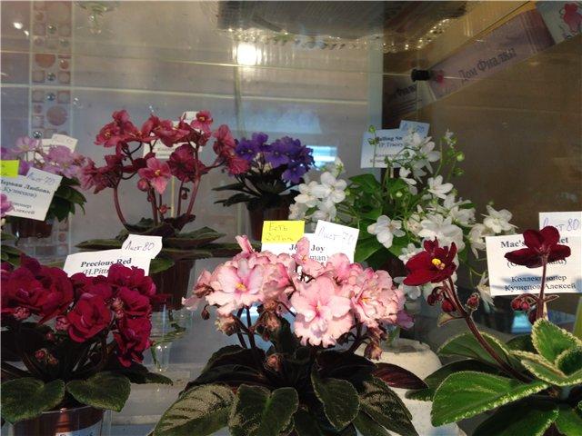 Выставка цветов - Страница 2 B5794c4bbc87