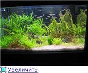 Мои последние аквариумы - Страница 2 Faad9f3047d3t