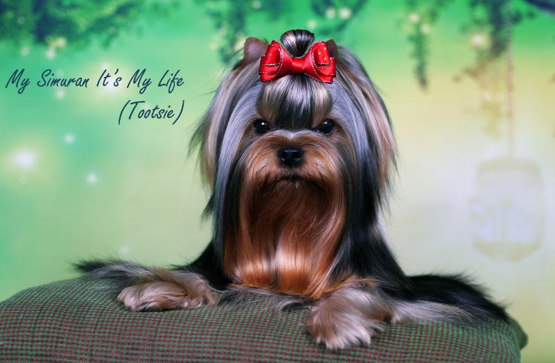 My Simuran It's My Life (Тутси)  56c41899a1a6